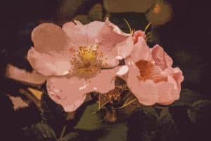 Pink Flower Mural