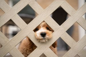 Puppy sticking its head through a fence